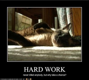 funny-pictures-cat-does-not-work-hard