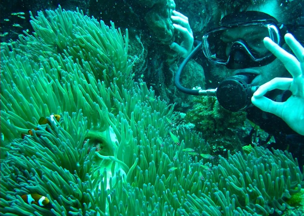 Epic Quest Update #7: Scuba Steve Finds Nemo
