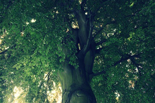 lothlorien-tree-lord-of-the-rings