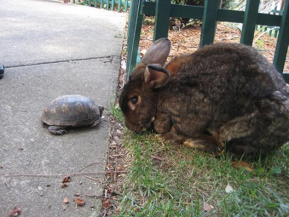 Turtoise Hare