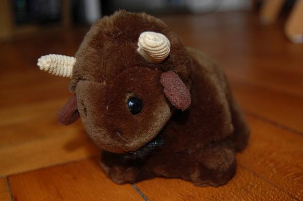 cute buffalo