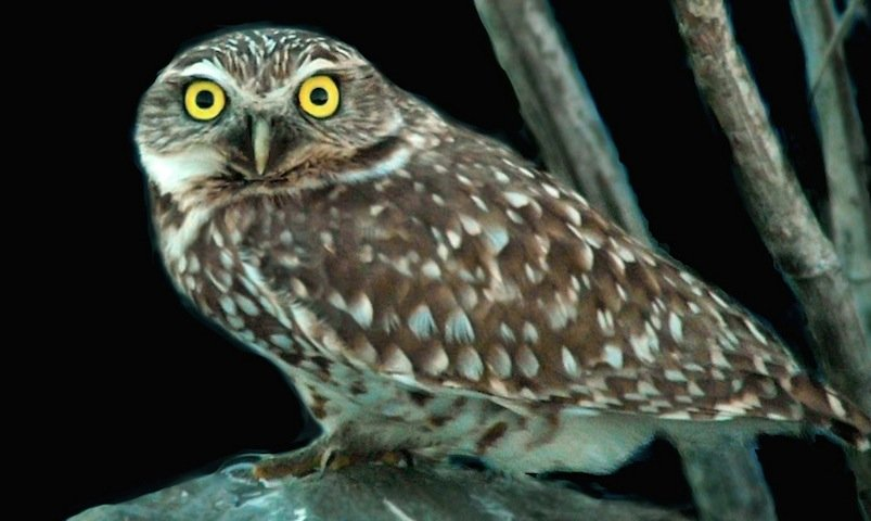Legit question, how much do owls sleep?