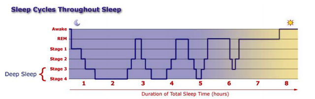 As you can see, the duration of our sleep stages shift throughout the night.