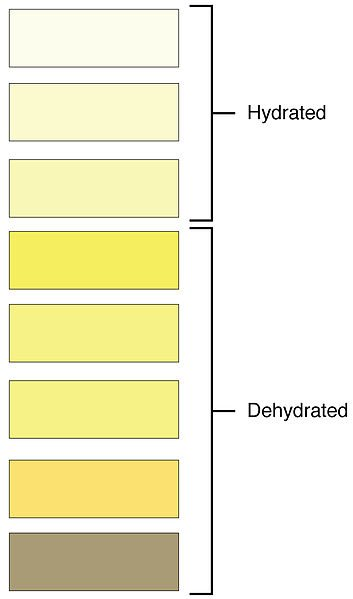 This chart of urine color can help you decide if you should drink more water or not.