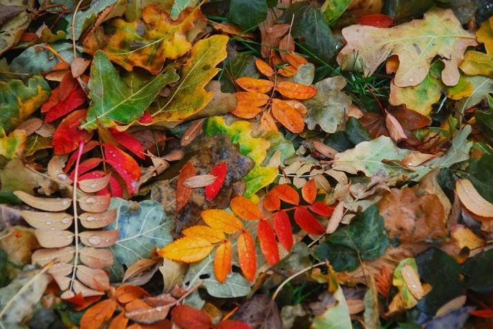 variety leaves