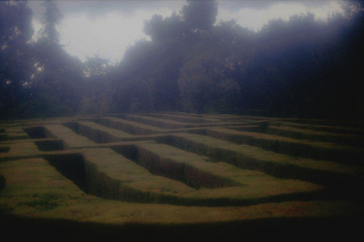 green hedge maze