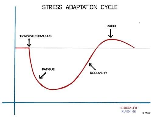 Stress Adaptation