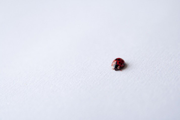 Don't sweat the small stuff like this ladybug.