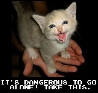 its dangerous cat