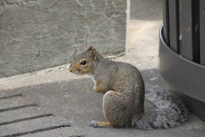squirrel posture