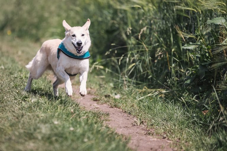 Running after your dog would be perfect for Tabata, as long as you can convince them to slow down...