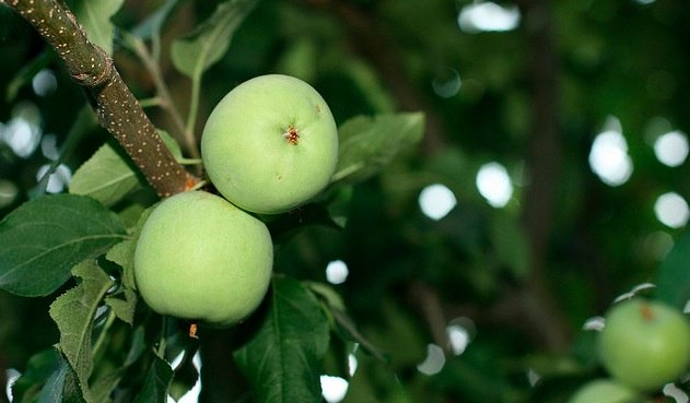 Where do apples fall on the glycemic index?
