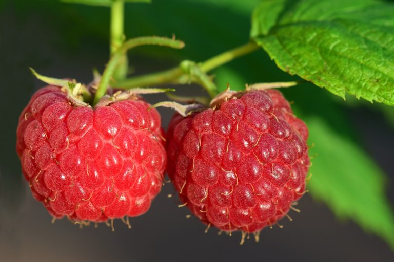 Raspberries are low in calories in that one cup is only about 65.