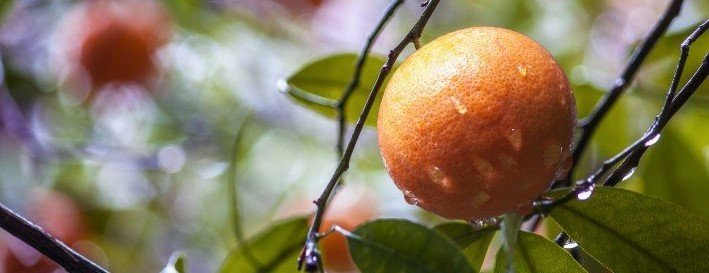 Eat a variety of fruits, like mandarins. We'll explain why shortly.