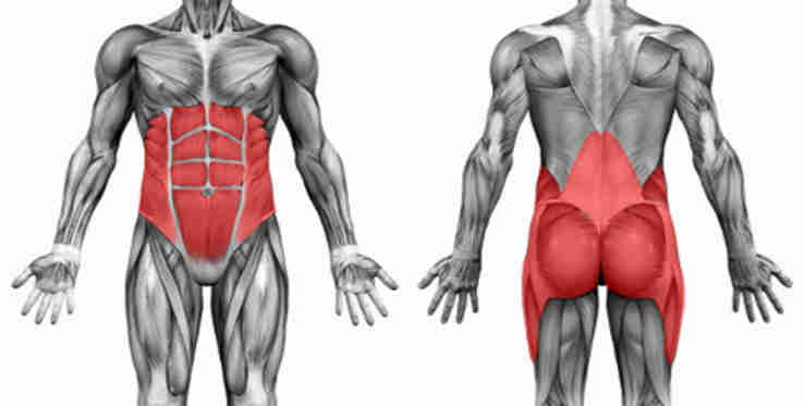 A front and back image of the core muscles.