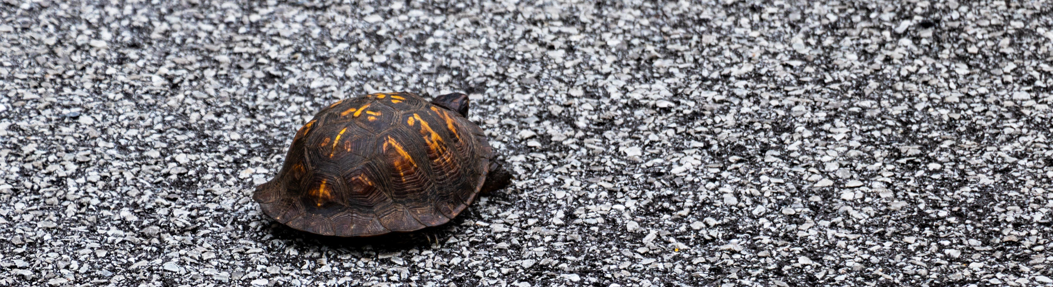 This asphalt probably isn't the most ideal place to jump rope, not just because there's a turtle there.